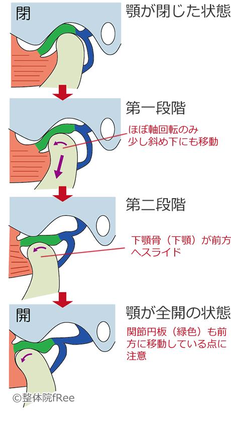 正常な顎の開く動き